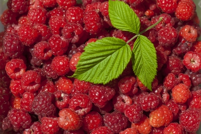 Green Tea Extract Tablets, Berries, and Other Antioxidant Power Foods