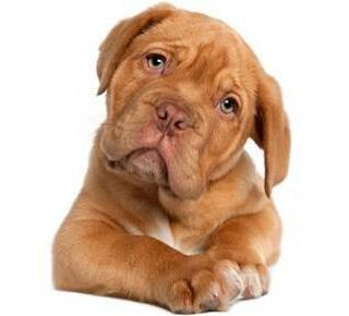 Having Healthy Pups ~ A Few Tips On Keeping Your Dog Healthy