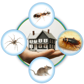How Often Is It A Good Idea To Have Your Home Inspected For Pests?