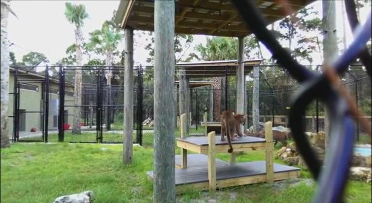 2014-11-Panther-Habitat-p