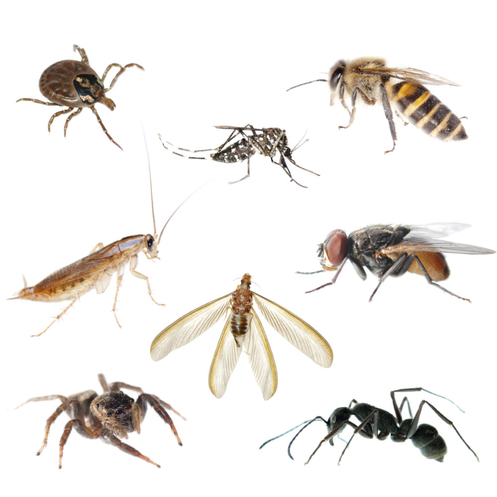What Bugs You: Problem Pests in Arizona