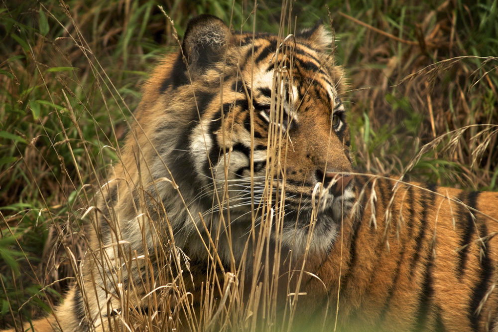 Tips on How to Enjoy Wildlife Tourism Responsibly In Tadoba Tiger Resort