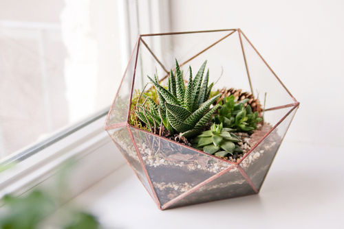 5 Ways to Incorporate Plant Life into Minimalist Home Interior Design