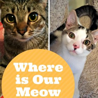 Spoil your cat with Meow Mix Bistro Dry Cat Food