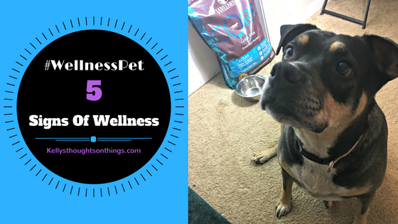 5 Signs Of Wellness #wellnesspet