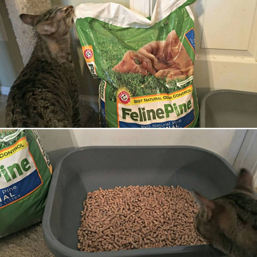 feline pine original non clumping cat litter coupon and giveaway kellys thoughts on things. Black Bedroom Furniture Sets. Home Design Ideas
