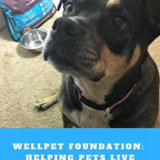 WellPet Foundation is there for Pets in NEED! #WellnessPet