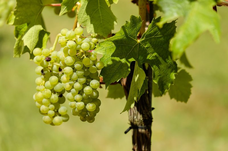 Wine Country Offers Great Family Fun