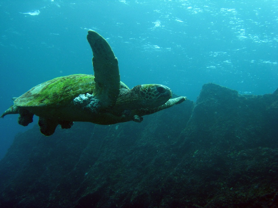seaweed snacks for turtles too