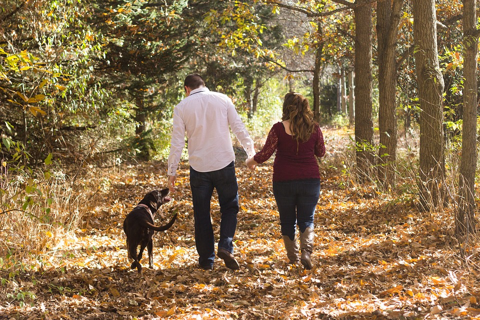 Cost Effective Ways To Keep Your Pooch Happy and Healthy