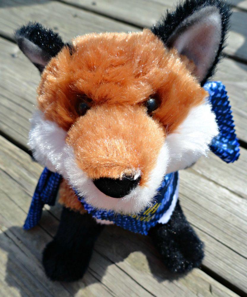 nocturnals fox