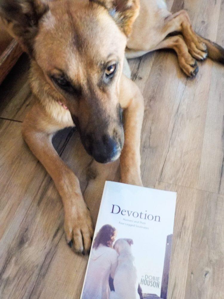 Bay Loves Book