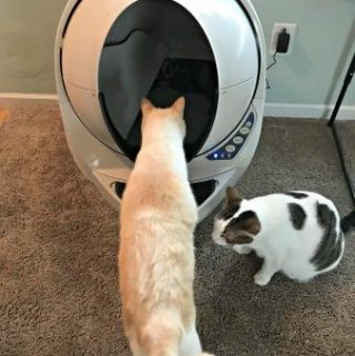 The Litter Robot All Cats Will Absolutely Love