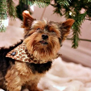 Spice Up Your Pet's Holiday Style with SF&Co.