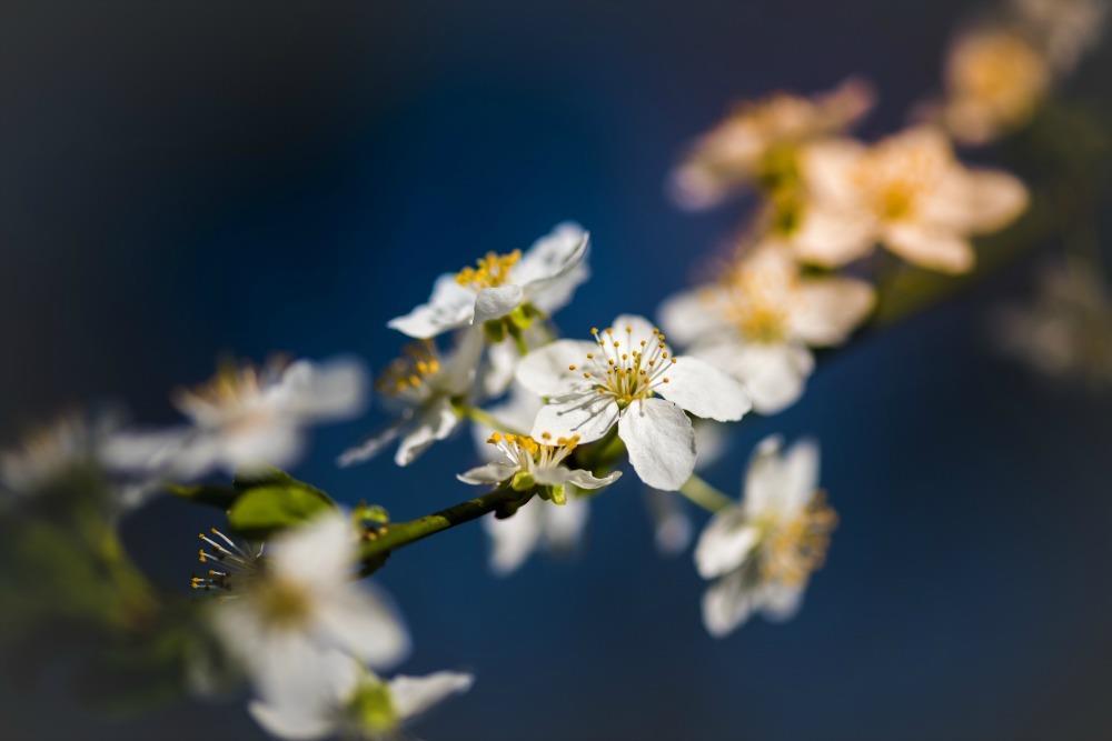 Using Statement Plants to Brighten up Your Garden