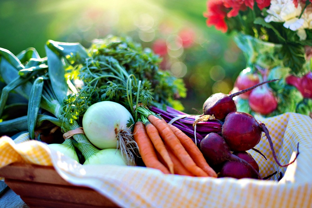 Growing Food in Your Garden Here Are Some Tips