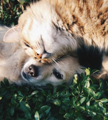 Latest Gadgets Perfect for Your Pets