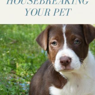 Basic Tips for Housebreaking Your Pet