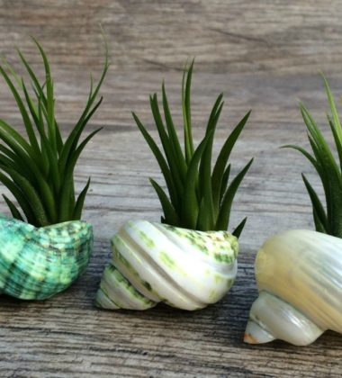 Innovative and Memorable Plant Gift Ideas for Special Occasions