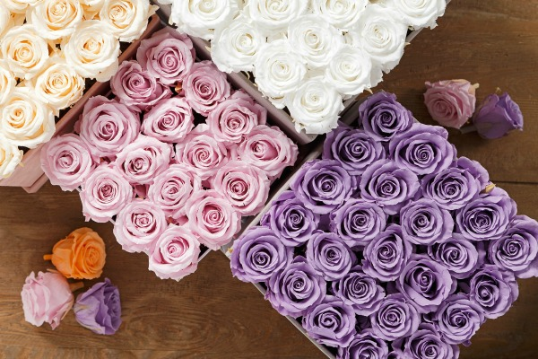 Leave a Lasting Impression with Saaya Rose 3