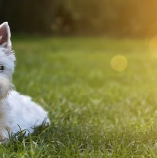 How to Protect Your Pet in the Warm Summer Weather