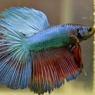 A Full Guide on How to Take Care of a Betta Fish