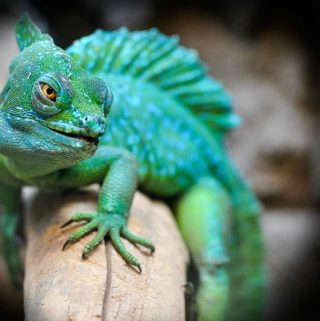Ways To Make Sure Your Reptile Stays Healthy