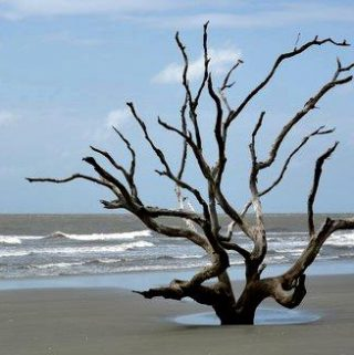 Exploring the Austere Beauty of the Lowcountry