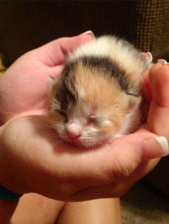 Where to See Cute Baby Animals around the World