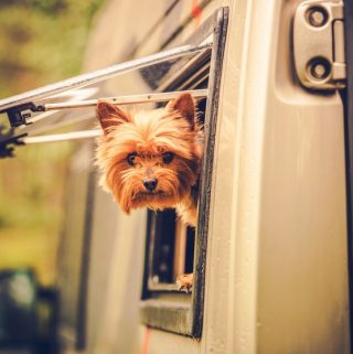 Camping with Class: How to Bring Your Dog on Your Trip
