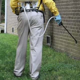 Eco-Friendly Pest Control Tips For Your Home and Gardens