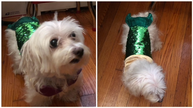 Comfortable and Safe Pet Costumes from Pet Krewe 1