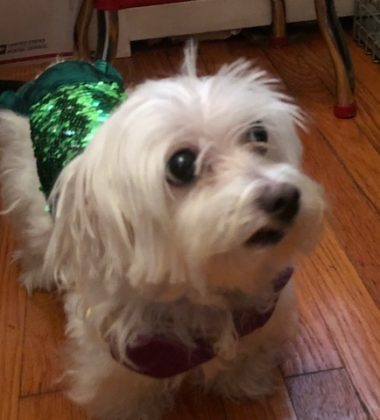 Comfortable and Safe Pet Costumes from Pet Krewe 3