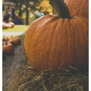 Best Pumpkin Patches to Visit this Fall Season