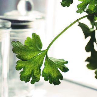 The Absolutely Essential Healing Herbs For Your Mini-Garden