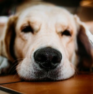 What Emotional Support Animals Do, And Why You'll Want One