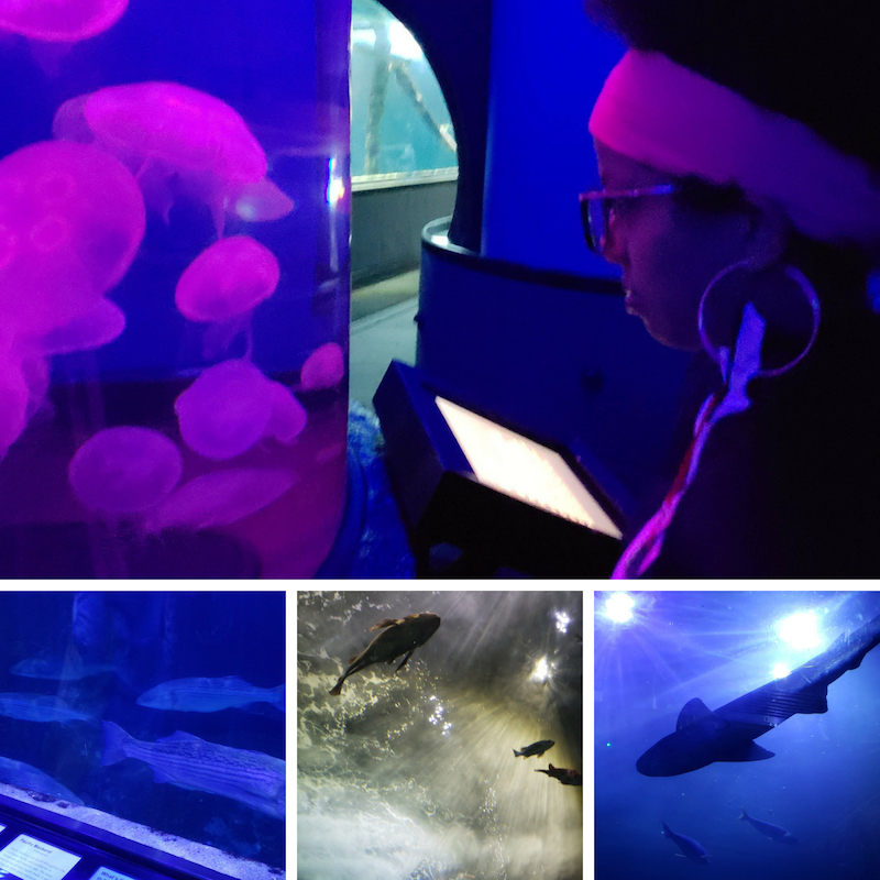 Pictures of sea creatures at the Aquarium by the bay