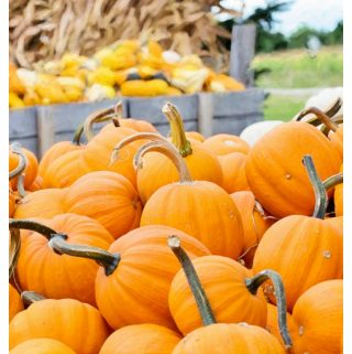 Top Pumpkin Patches in South Carolina