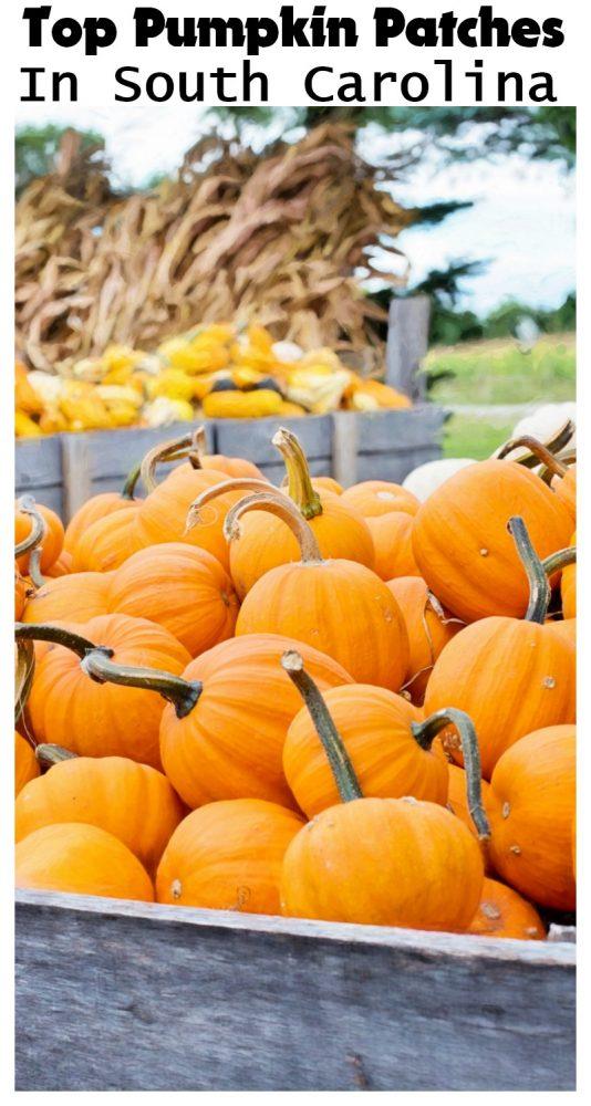 Top Pumpkin Patches in South Carolina