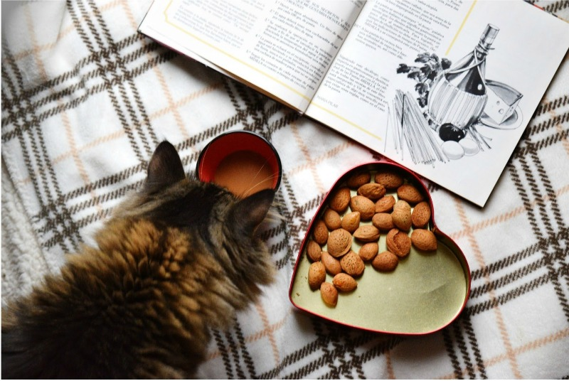 5 Clear Signs Your Cat Needs New Food