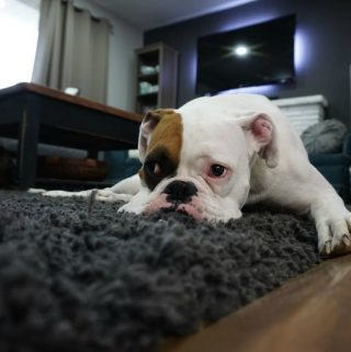 How To Recognize That Your Dog Might Be Ill