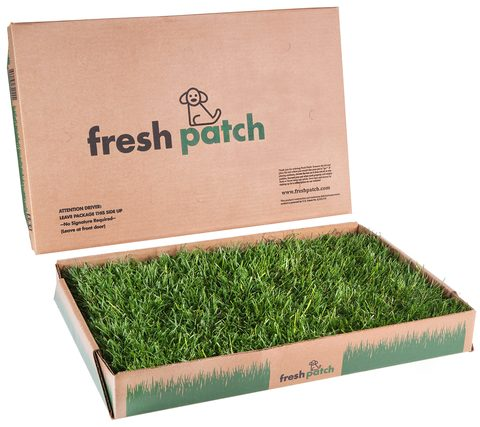 Box of grass from Fresh Patch