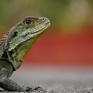 Reptiles as Pets: What You Should Know