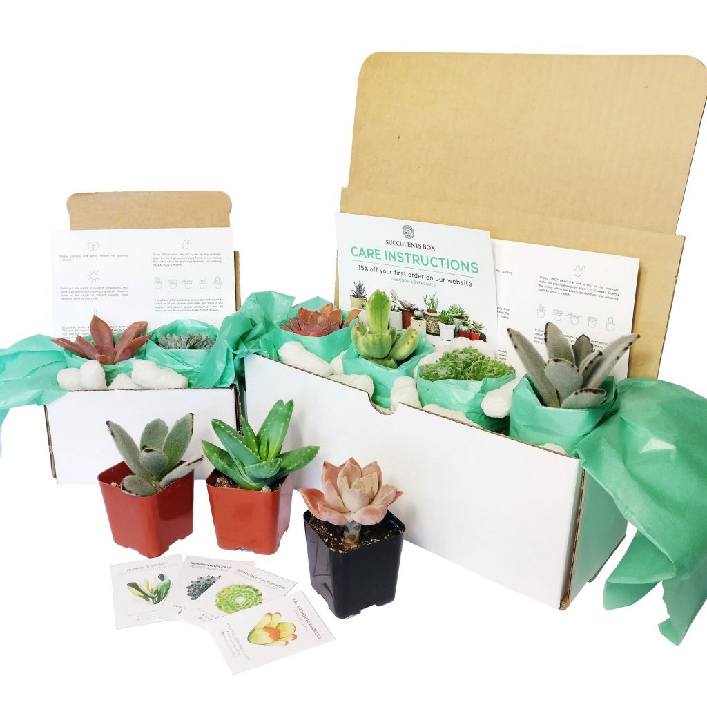 Succulents Box, who is based in California, they offer 150 varieties of succulents and monthly subscription boxes.