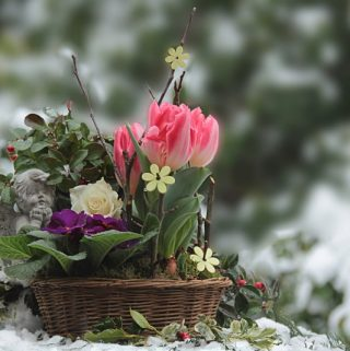 How To Keep Your Potted Plants Safe During Winter