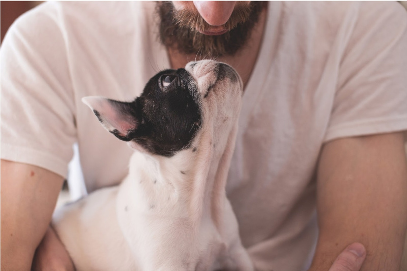 Gifts for the Dog Lover in Your Life