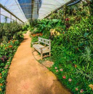 5 Amazing Garden Ideas You Should Consider