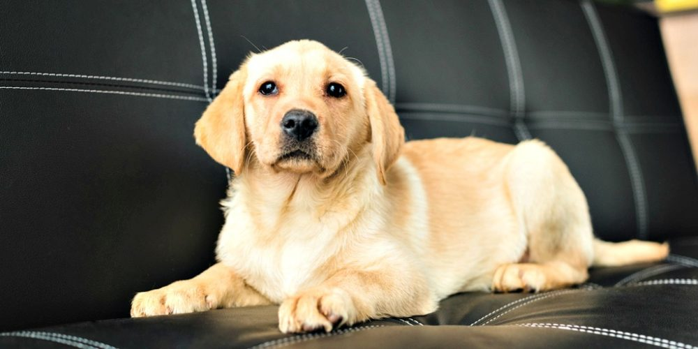 7 Tips for Puppy Proofing Your Home