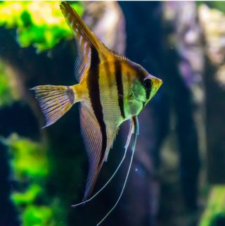 5 Things To Avoid When Setting Up a Saltwater Aquarium