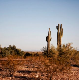 Surprising Stops In Arizona To Include In Your Itinerary